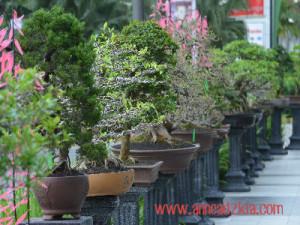 bonsai-di-living-world
